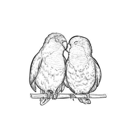 Sketch Lovebird parrots vector illustration. Lovebird parrot exotic bird engraving art design.