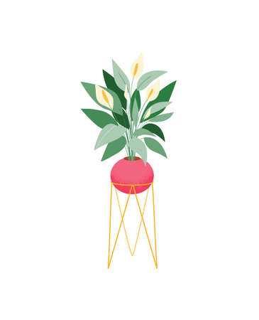 Potted house plant vector icon. Spathiphyllum flowering plant on stand. Indoor plant with beautiful tropical foliage.