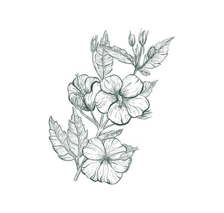 Hibiscus tropical flower vector sketch illustration. Sketch Hibiscus flower, isolated flower retro sign.