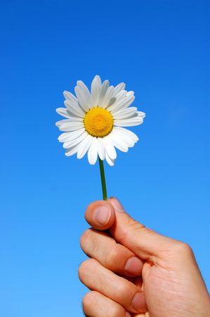hand holding a daisy in front of the blue sky