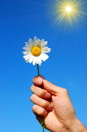 hand holding a daisy in front of a blue sky