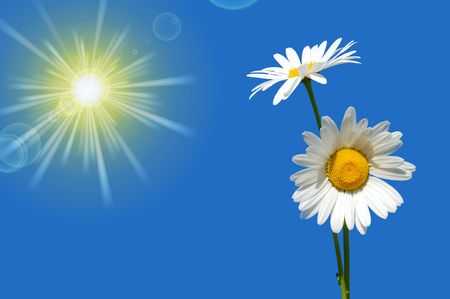 hand holding a daisy in front of a blue sky                                     photo