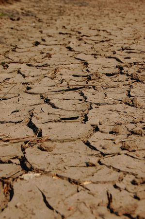 parch: a shot of dry soil on the ground