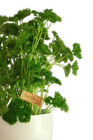 green fresh parsley isolated on white background.                                     photo