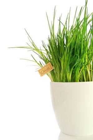 cebollin: verdes cebolletas frescas aislados sobre fondo blanco