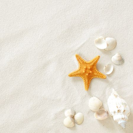 conch shell: Beach with a lot of seashells and starfish