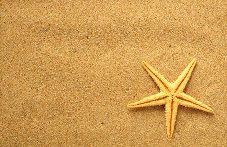 starfish and shells on the beach, vacation memories Stock Photo