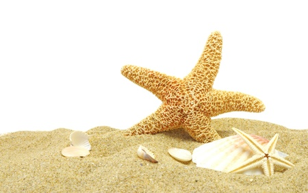 seastar and sand bank isolated on white background Stock Photo