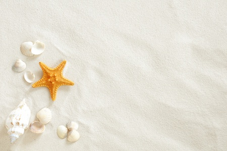 Beach with a lot of seashells and starfish photo