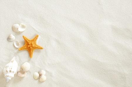 estrella de mar: Playa con un montón de conchas de mar y estrellas de mar Foto de archivo