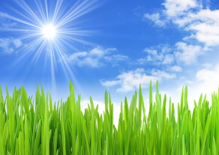 grassy field: green grass on meadow under summer sky whit clouds Stock Photo
