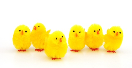 chicks: easter chicken decorations isolated on white background