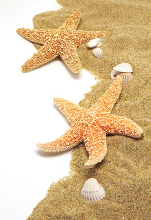 beach sand, shells and seastar border on white photo