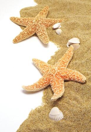 seastar: beach sand, shells and seastar border on white Stock Photo