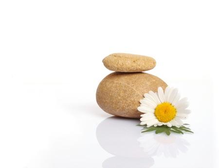 set of flowers on stone on white background Stock Photo - 13952342