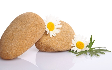 set of flowers on stone on white background Stock Photo - 15541869