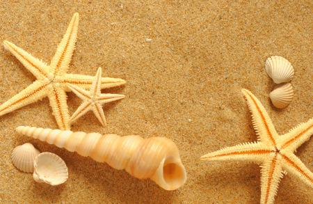 seafish: vacation memories from the beach, seafish and shell Stock Photo
