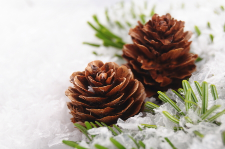 fir cones: christmas background of branch with cone Stock Photo