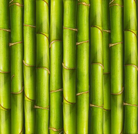 Vibrant bamboo stalks Stock Photo
