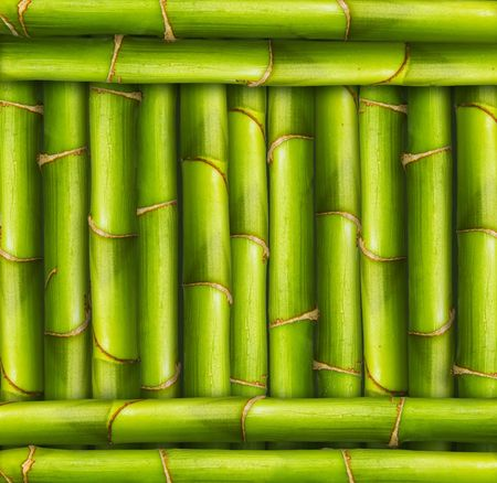 Vibrant bamboo stalks in a framed position