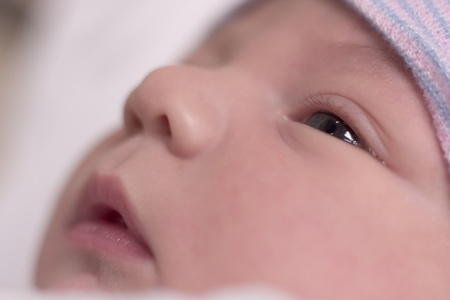 swaddled: Newborn baby boy resting