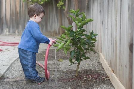 regando plantas: Boy regar un �rbol peque�o Foto de archivo