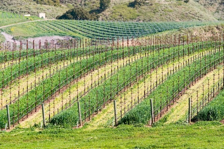 California winery Stock Photo