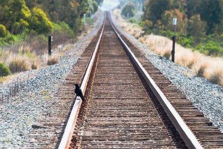 vogelspuren: Crow auf Bahngleisen