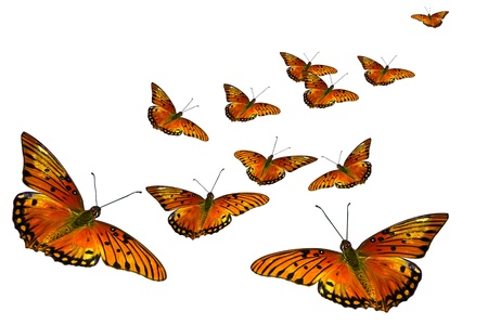 butterfly garden: Group of orange butterflies isolated on white background