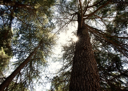 Sun peaking through forest trees Stock Photo