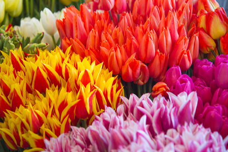Close-up of colorful flowers