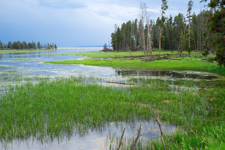 Wetland area of Yellowstone National Park
