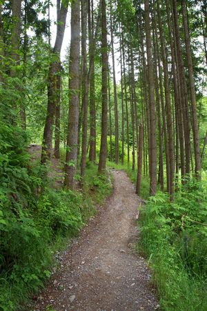 Dirt path going through a tree-filled forest in Canada Stock Photo