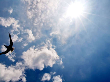 spirit new age: Clouds with Sun behind and flying bird