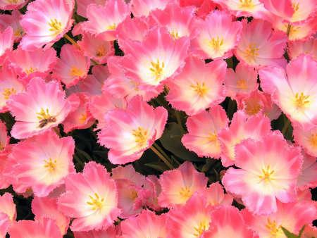 Botanical Garden: Spring Flower Background