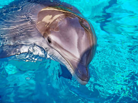 Dolphin close-up in blue water