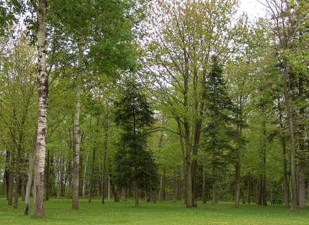 숲에서 많은 녹색 머릿단의보기