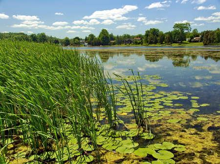 에밀리 호수, 온타리오, 캐나다. 여름 시간. 스톡 콘텐츠