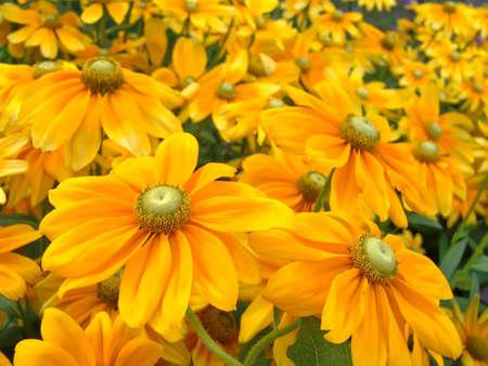 여름 꽃 배경입니다. 허버라.
