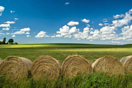 Hay bales on green summer fields. Nice sky with clouds. Standard-Bild