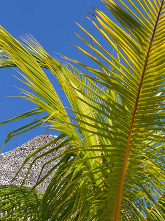 Green palm tree leaf on blue sky background. Vacation time. 스톡 콘텐츠
