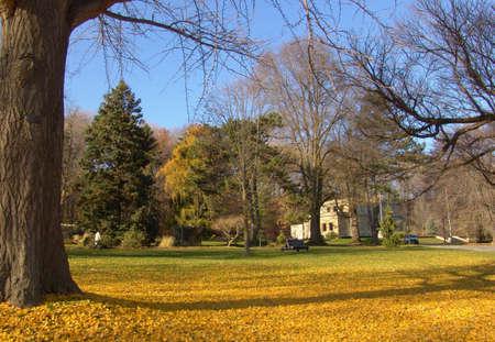 Autumn landscape. Bright yellow autumn leaves background