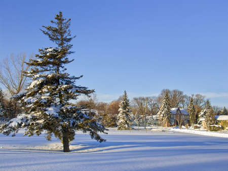 Winter landscape with Christmas trees covered by snow