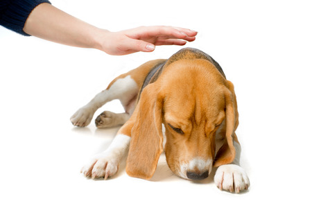 hand stroking the dog Stock Photo