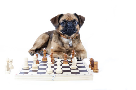 cut the competition: Brabant chess Stock Photo