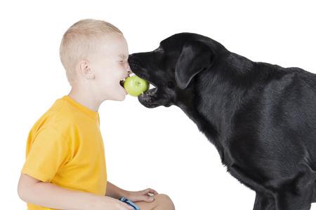 perro comiendo: Un niño y un perro que muerde una manzana sobre fondo blanco en el estudio