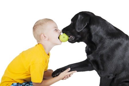 dog bite: A child and a dog bite an Apple on white background