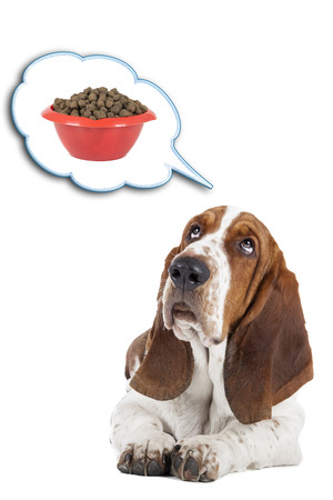 Basset hound dreams of a bowl of food photo