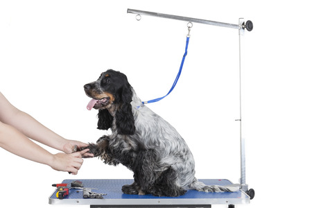 dog grooming: Dog grooming table on a white background Stock Photo