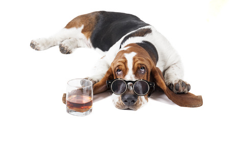 sad dog: Dog (Basset with a glass of whisky on a white background in the Studio
